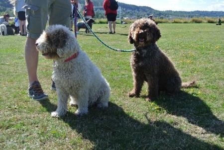 Chablis (Delaila) och Kia