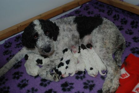 Nomie och hennes valpar